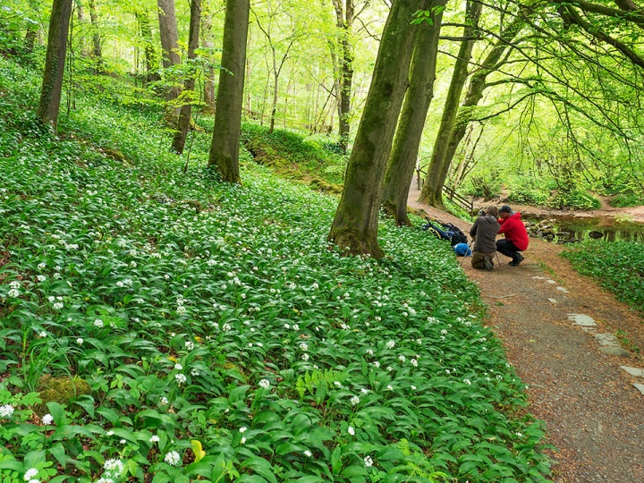 Amongst the wild garlic in Strid Wood, Bolton Abbey Workshop, May 2019.