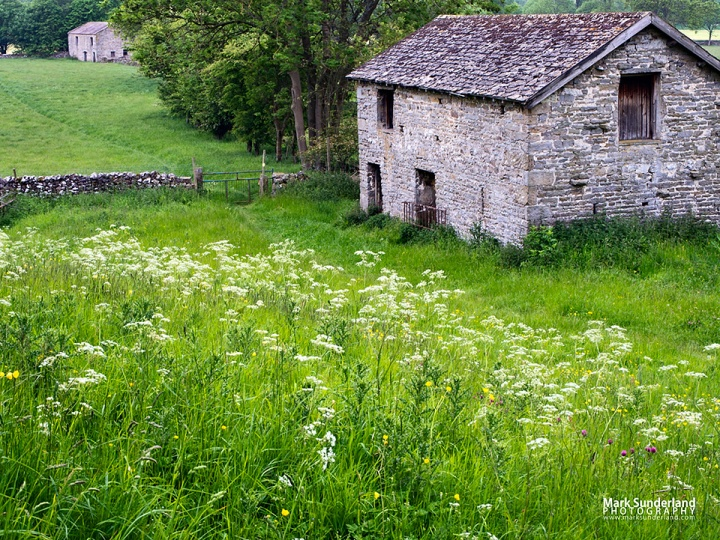 Cow parsley at the field barns near West Burton in 2015